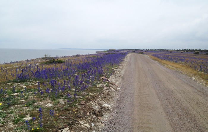 Kustvägen norrut i juni