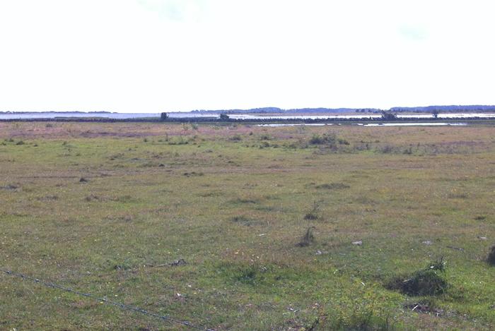 Södviks sjömarker